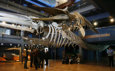 museo maritimo del cantabrico