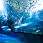 Aquarium San Sebastián
