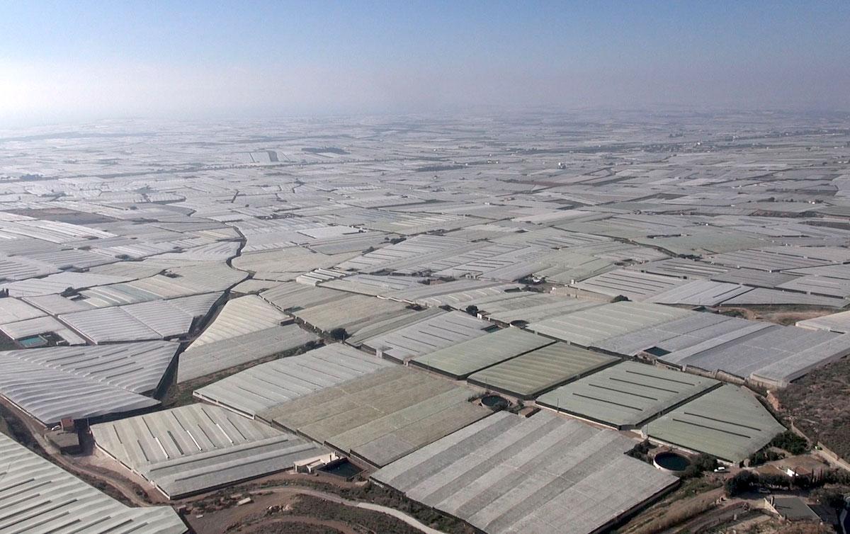 campo de dalias