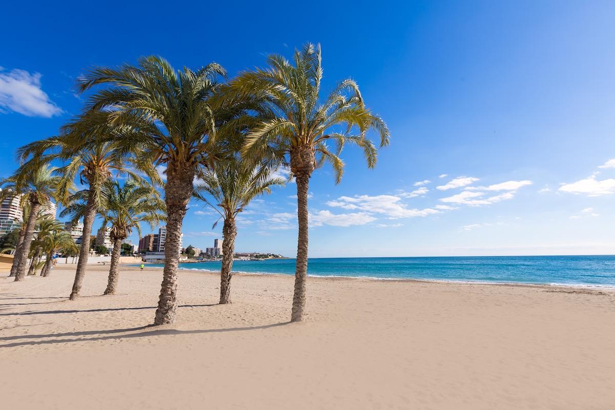 palmeras en la playa albufereta