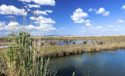 Parque Natural de s'Albufera mallorca