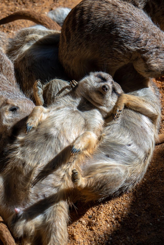 animales bioparc valencia