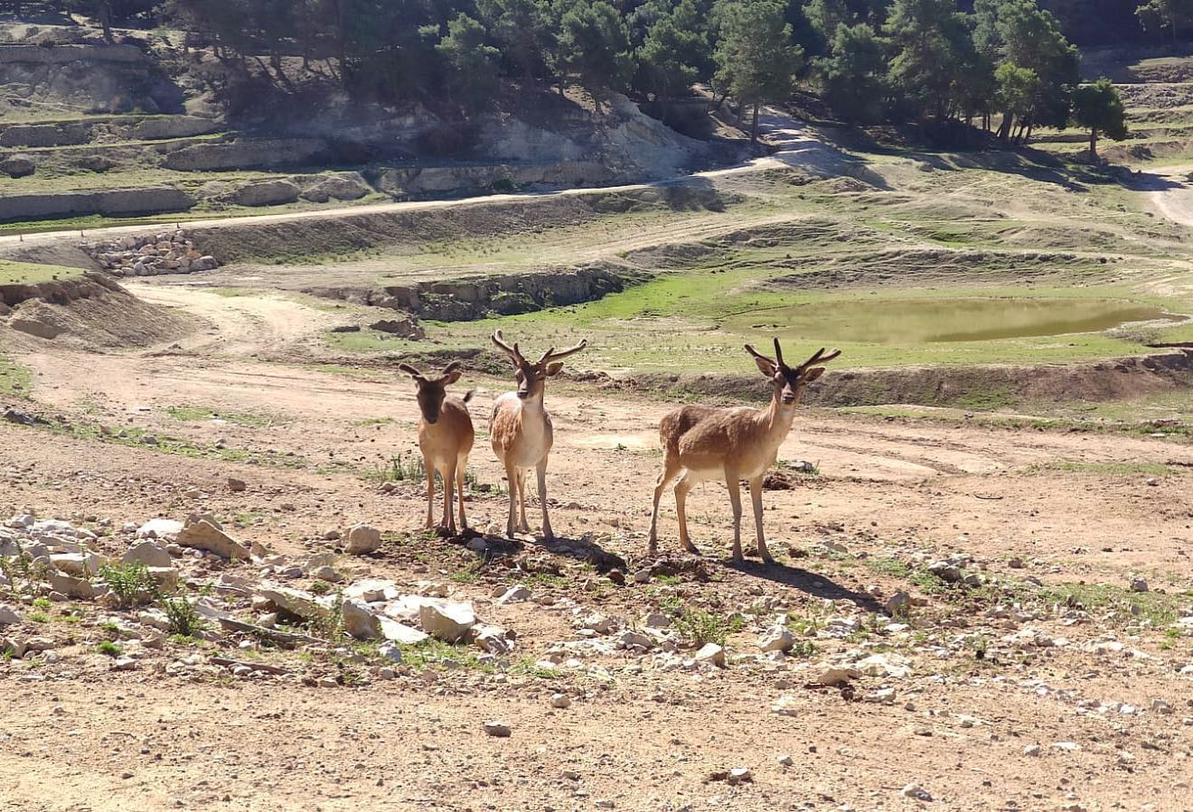 animales safari aitana