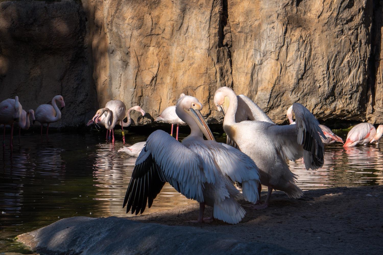 aves bioparc valencia