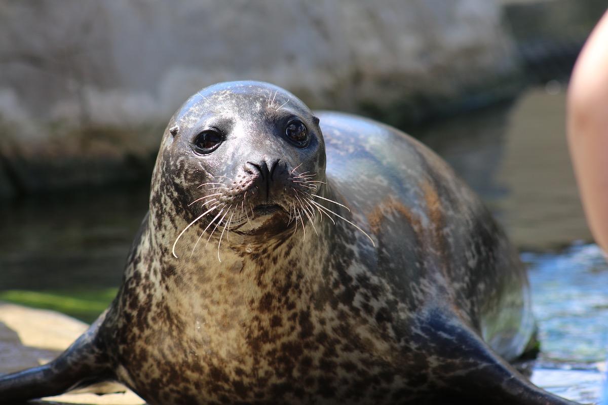 focas oceanografic