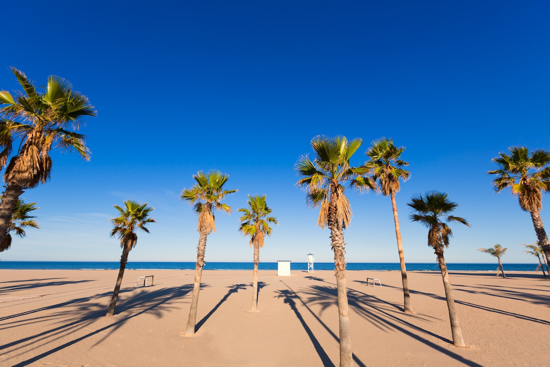 palmeras en playa de gandia