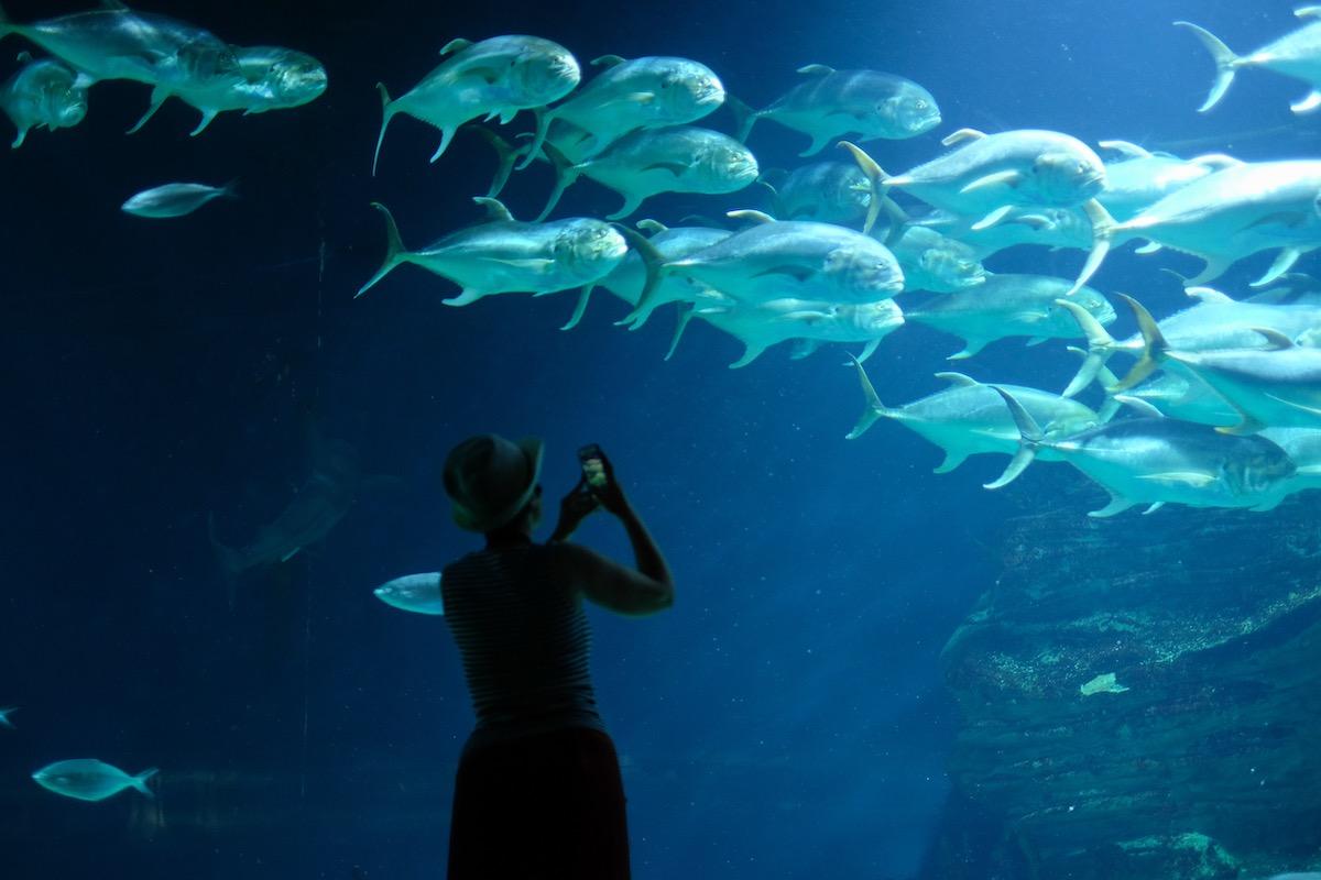 peces oceanografic