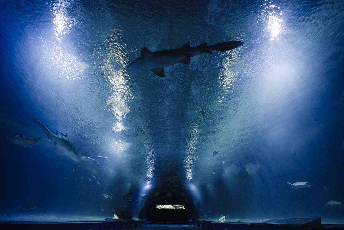 tunel tiburones oceanografic