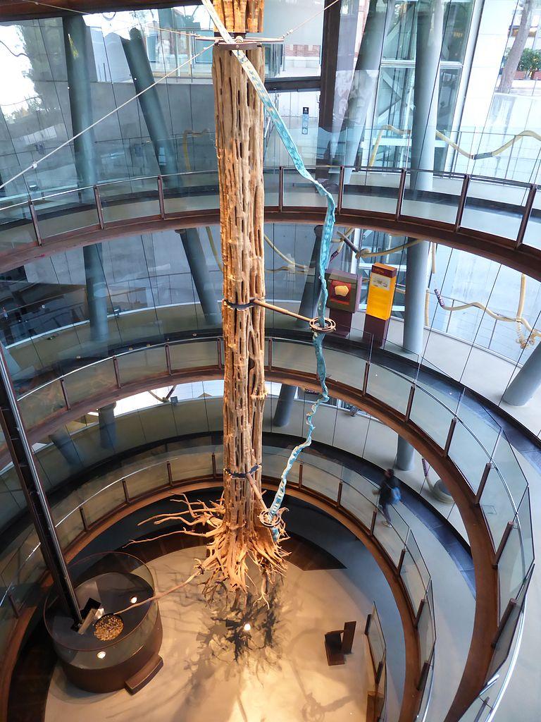 arbol museo de las ciencias barcelona