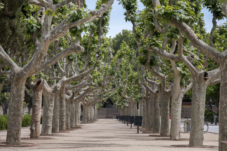 arboles en el parque de la ciudadela