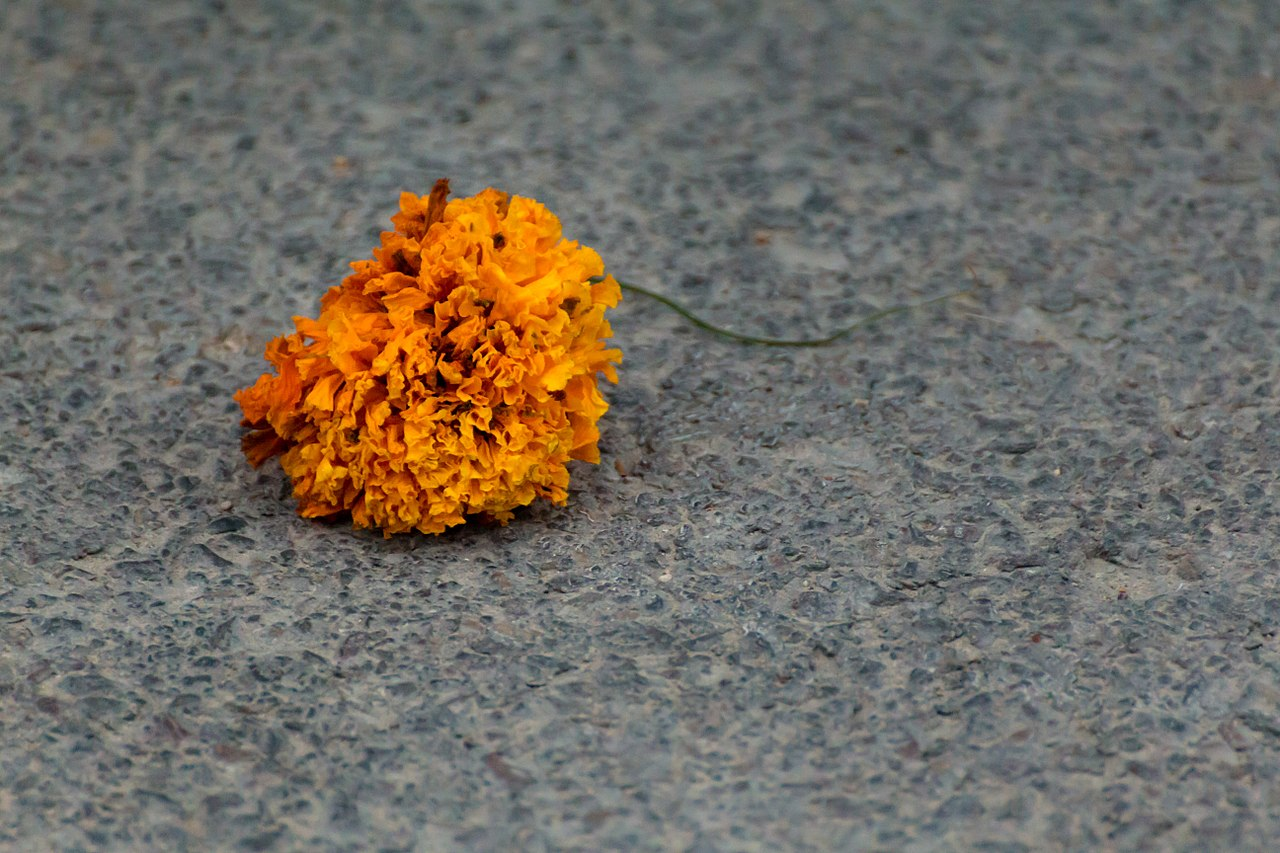 batalla de flors valencia